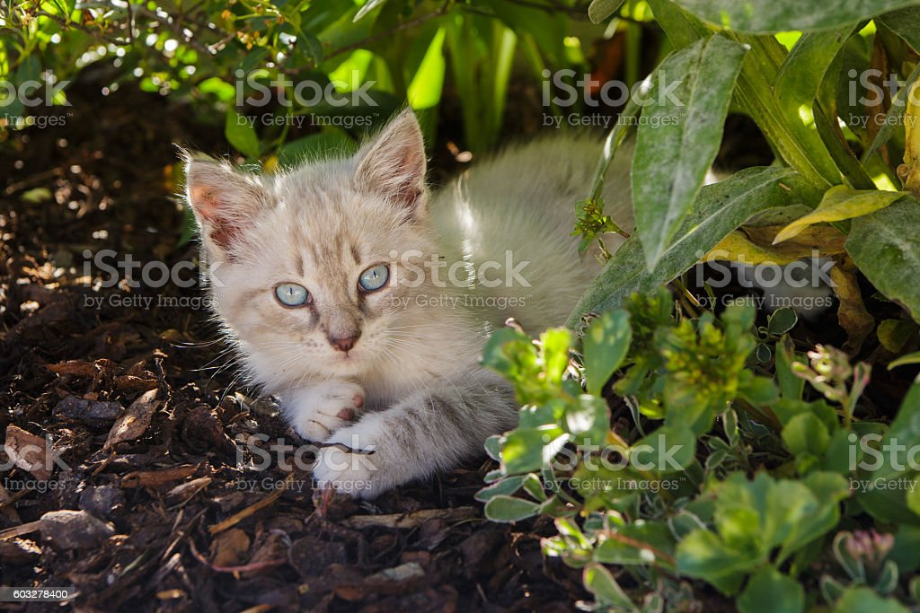 young cat lying stock photo