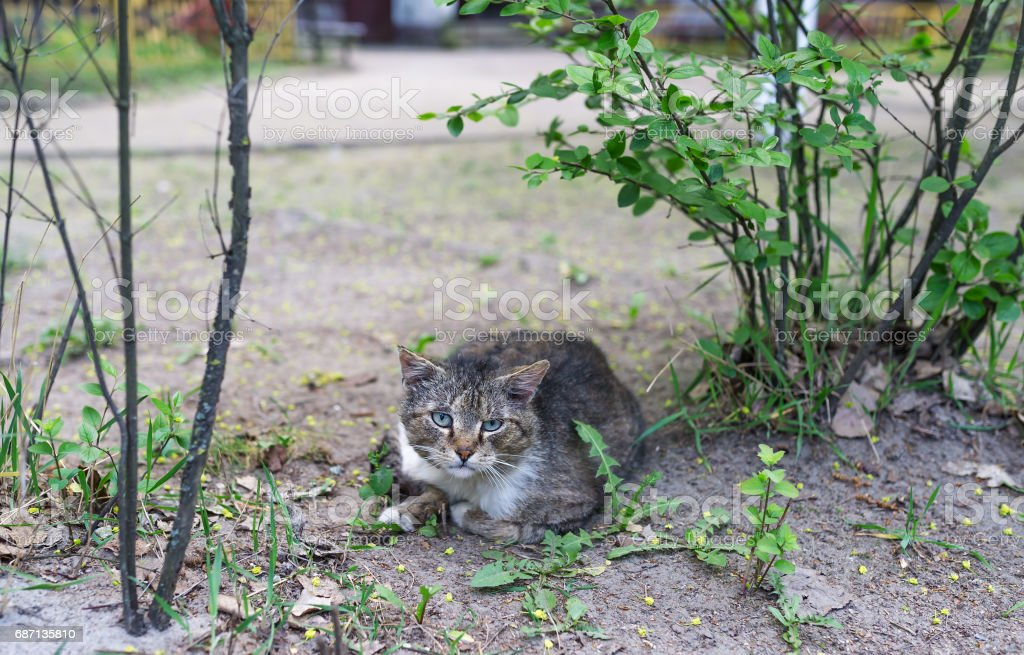 Young cat relax on the ground at country side stock photo
