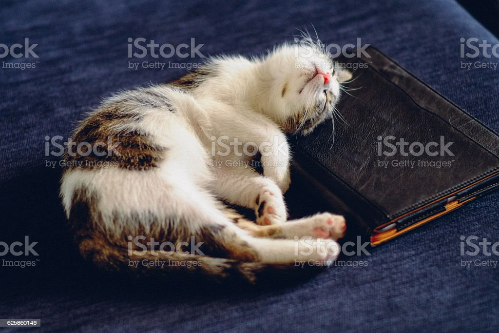 Young cat sleeping on a tablet stock photo