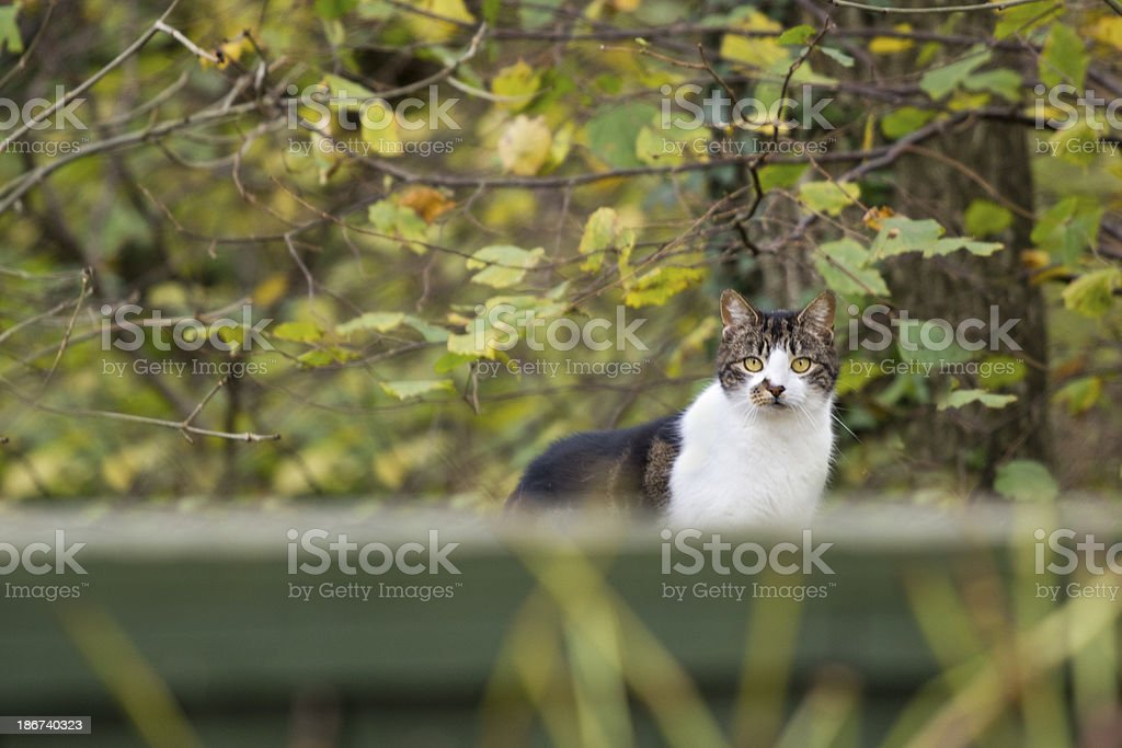 Young cat stood on a fence royalty-free stock photo