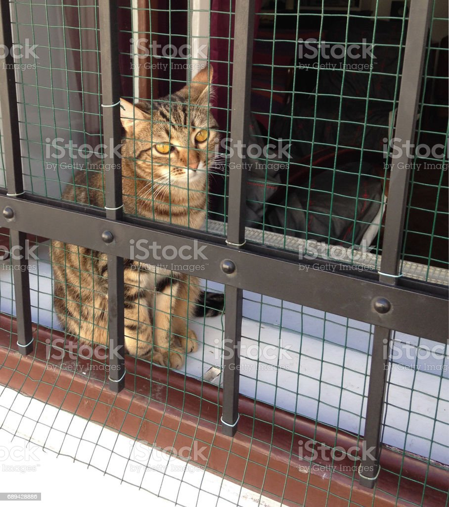 young cat wanna play outside cage stock photo