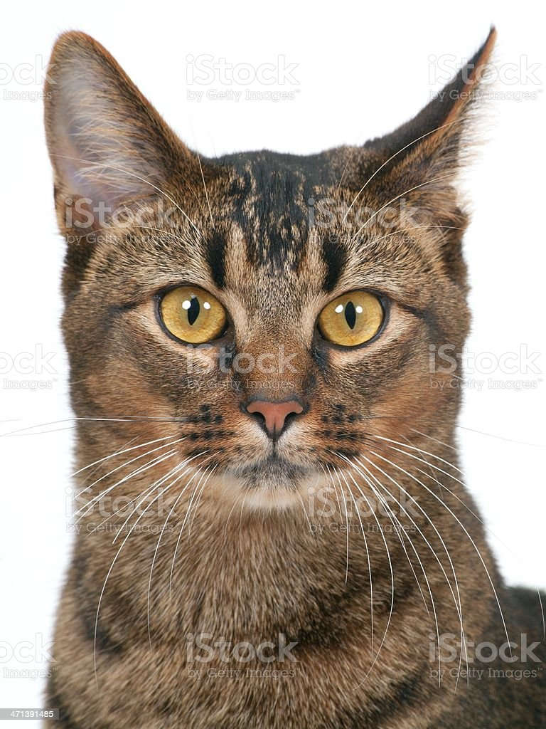 Young cat watching stock photo