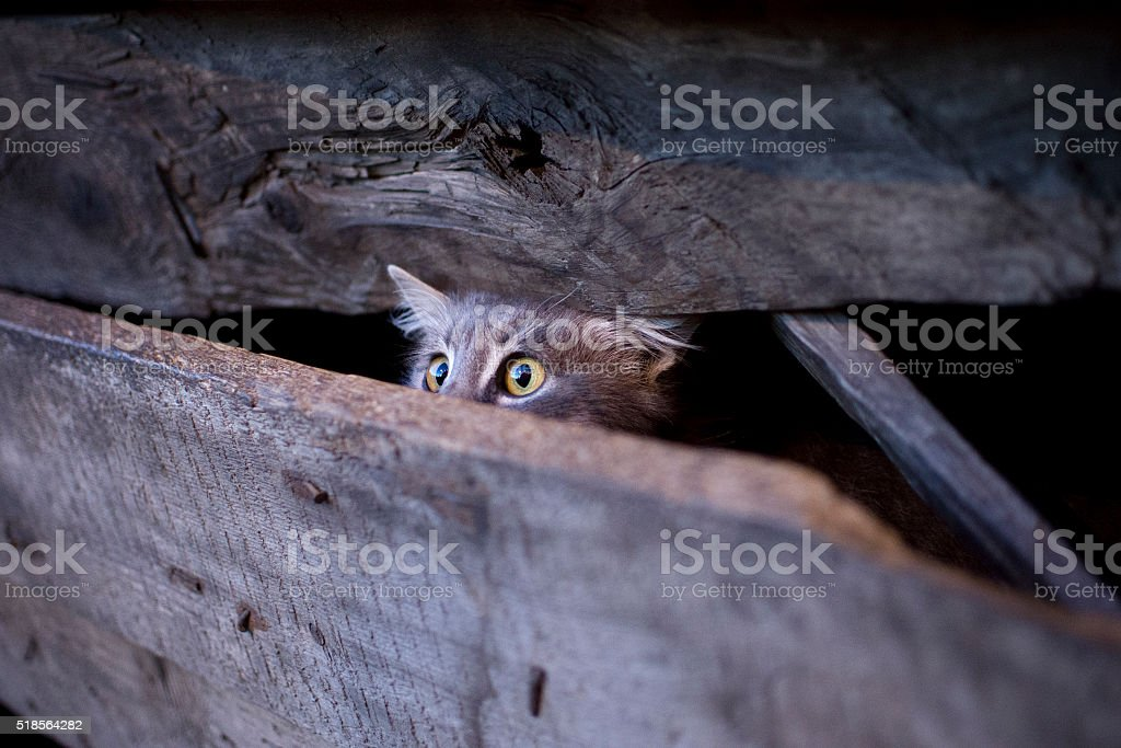 Young cat with frightened gaze hidden behind a fence stock photo