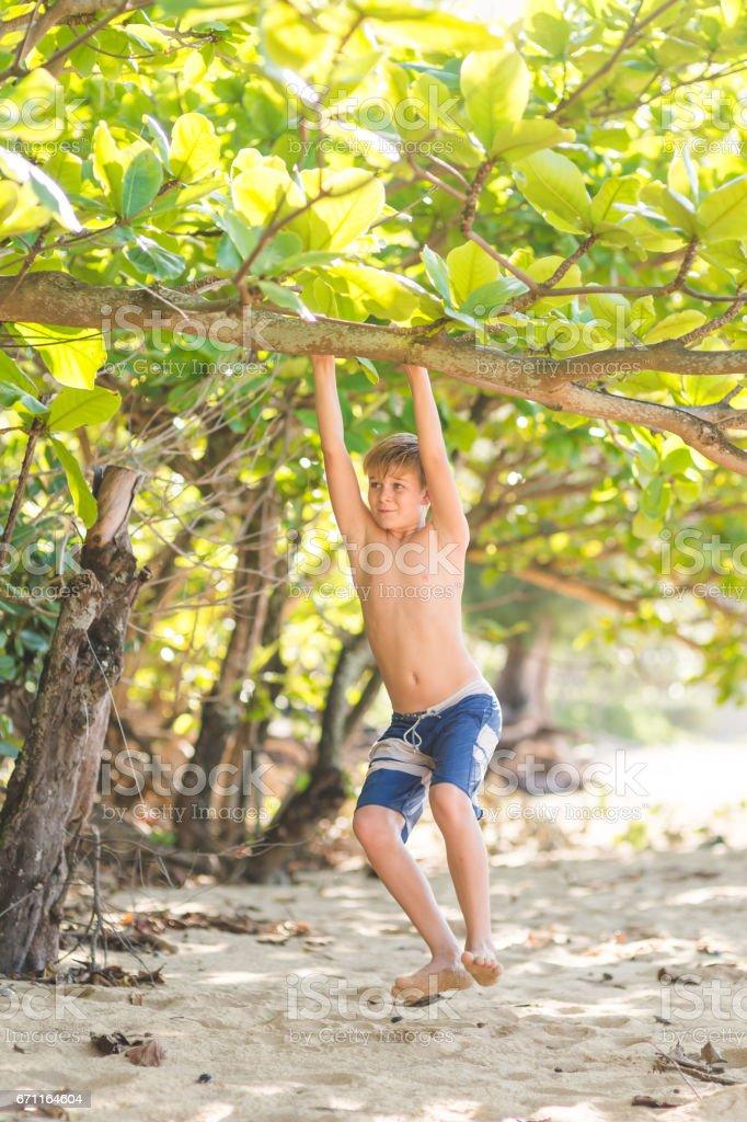 Young Caucasian boy hangs from tree limb on sandy Hawaii beach stock photo