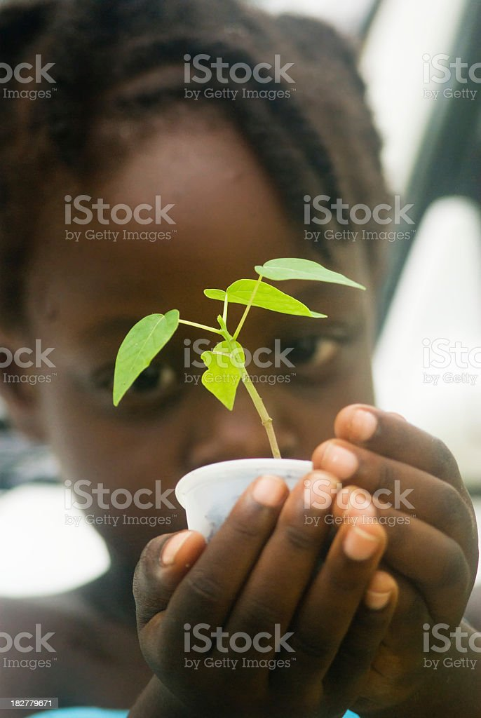 Young child holding small green plant royalty-free stock photo