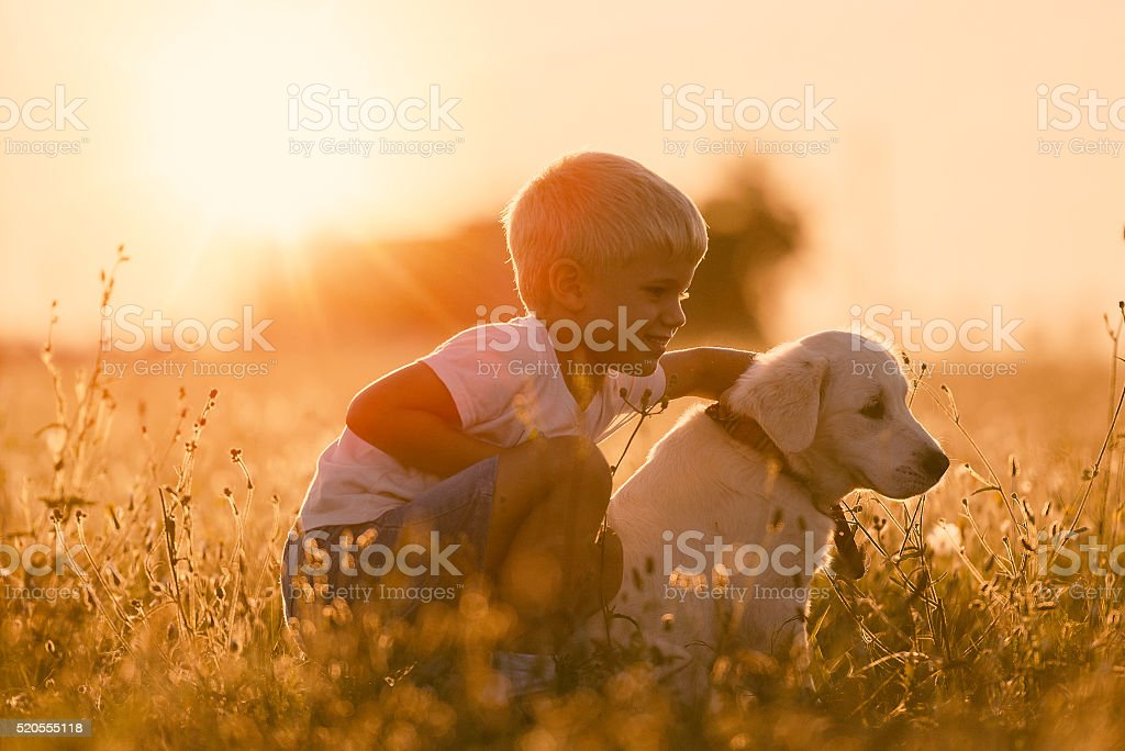 Young Child Training Golden Retriever Puppy Dog Looking Right stock photo