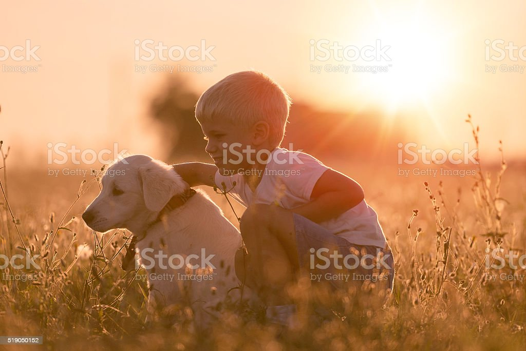 Young Child Training Golden Retriever Puppy Dog Sunny Day stock photo