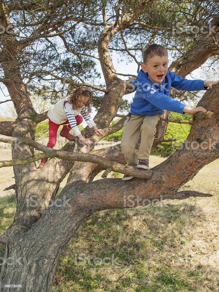 young children climbing in a tree stock photo