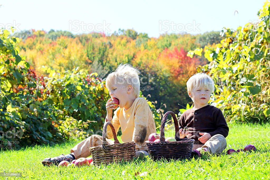 Young Children Having Fruit Picnic at Apple Orchard stock photo