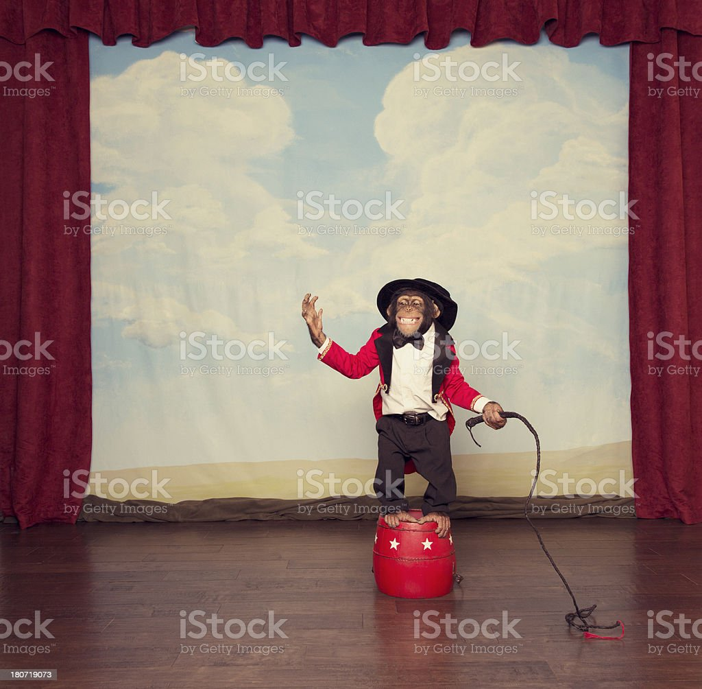 Young Chimpanzee Dressed as Circus Leader on Stage stock photo