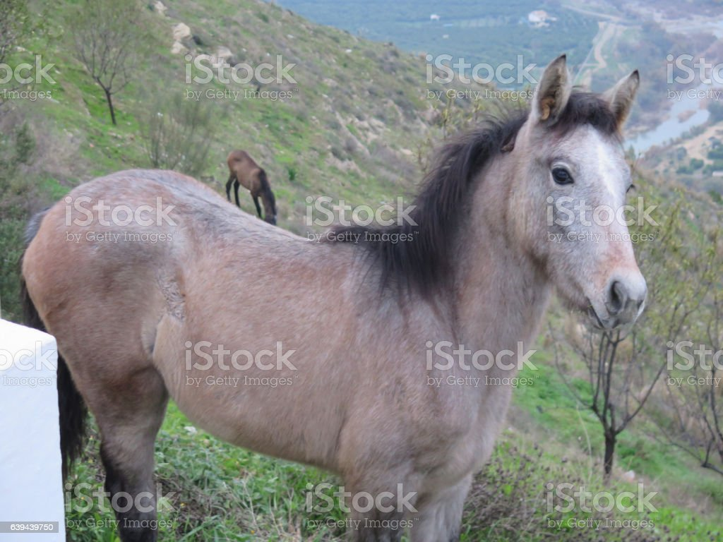 Young colt on steep hillside stock photo