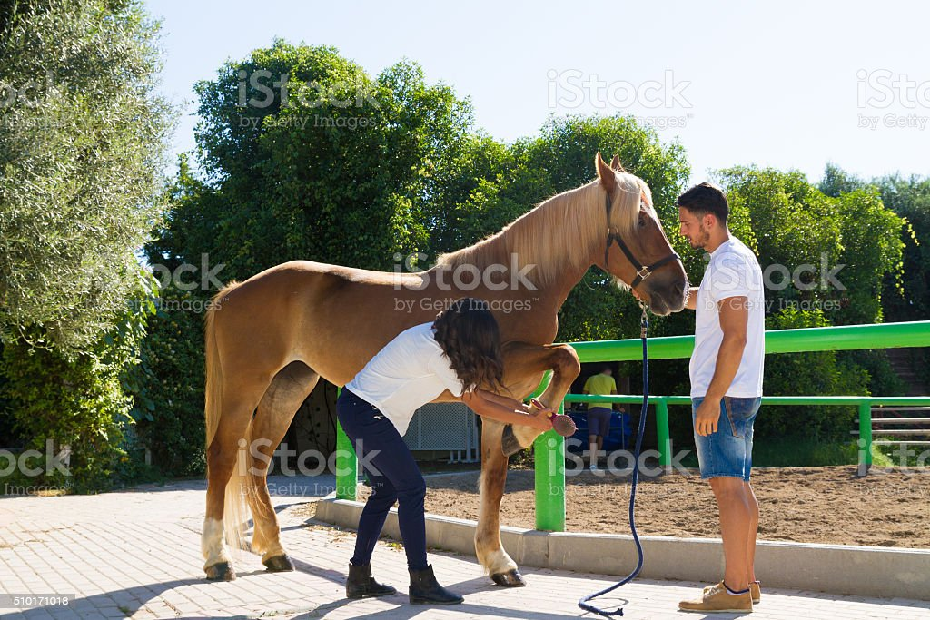 Young couple examining the hoofs of a female brown horse stock photo
