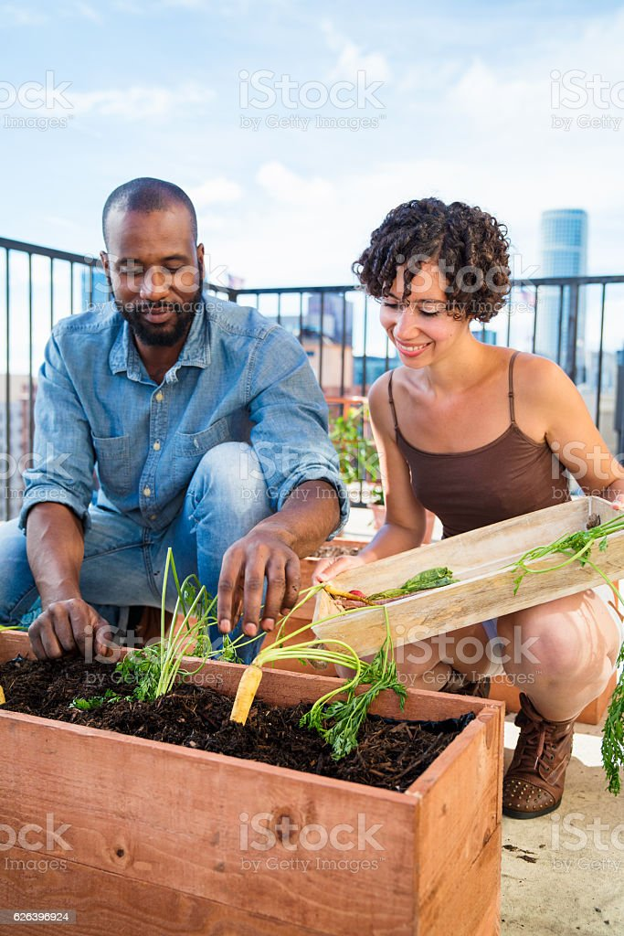 Young couple harvesting carrots from their rooftop garden stock photo