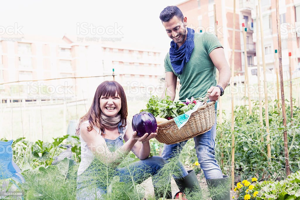 young couple of gardeners collects fresh vegetables stock photo