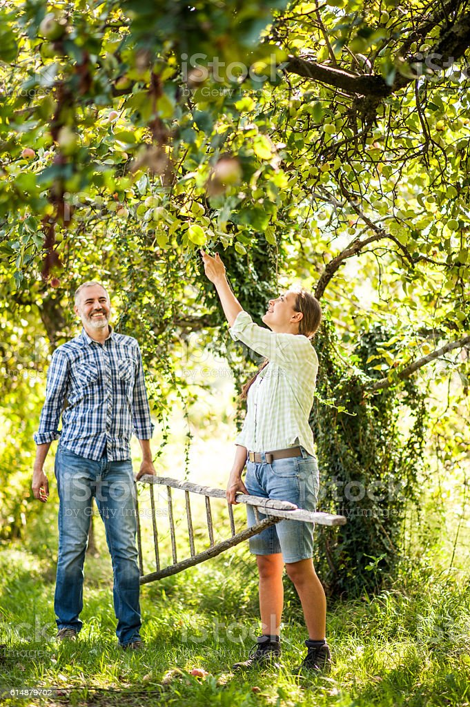 Young Couple Working in a Orchard stock photo