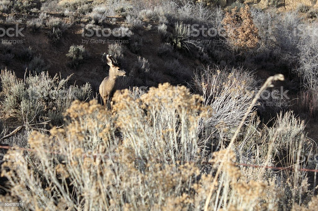 Young deer in brush stock photo