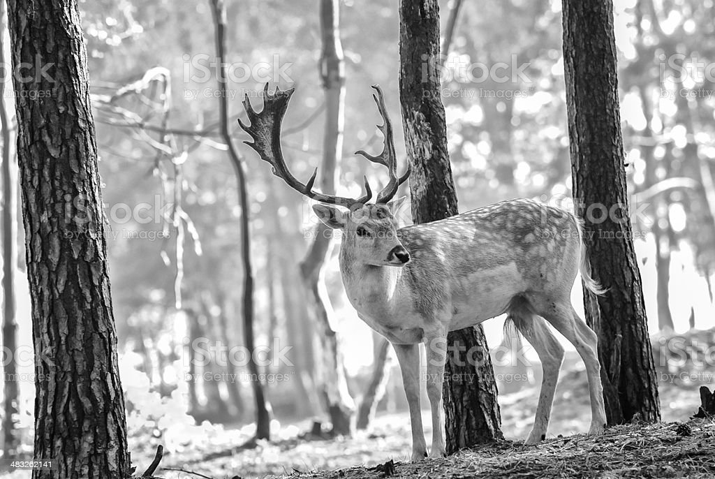 young deer posing in the forest stock photo