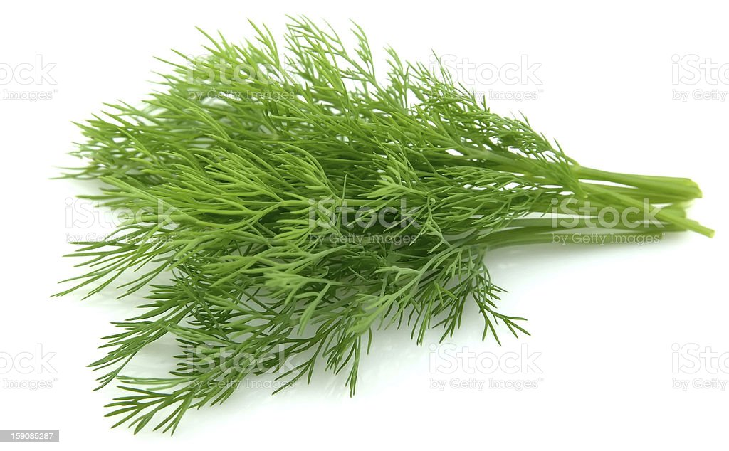 Young dill close up stock photo