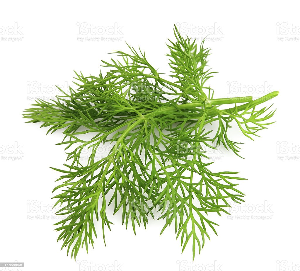 Young dill close up royalty-free stock photo