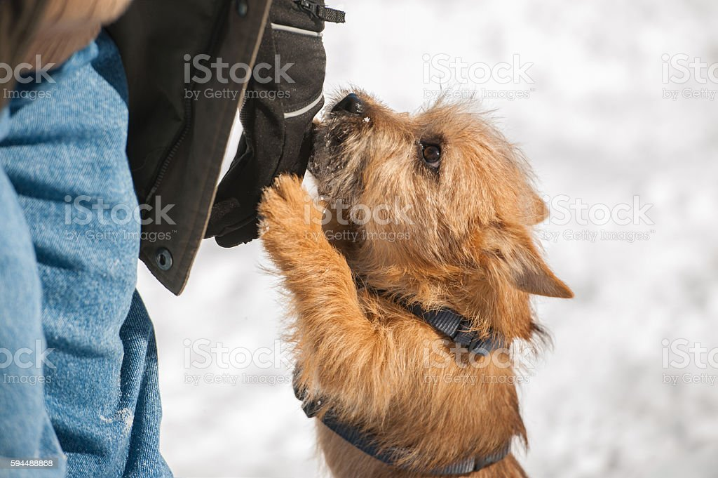 Young dog acting shy in the park stock photo