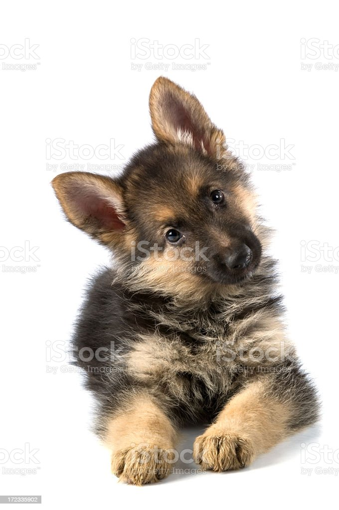 young dog stock photo