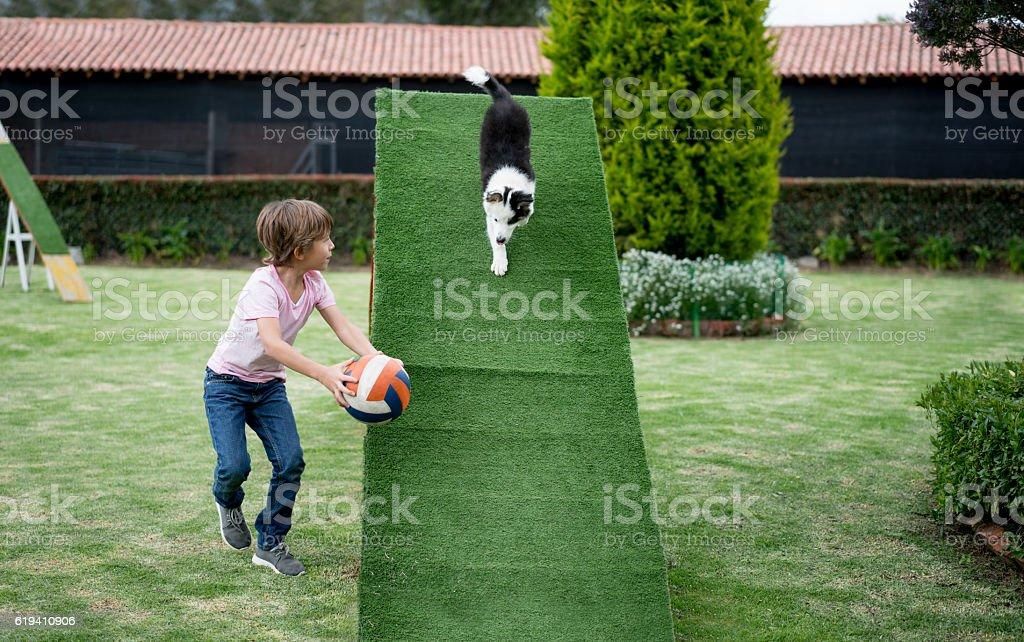 Young dog trainer at an obstacle course stock photo