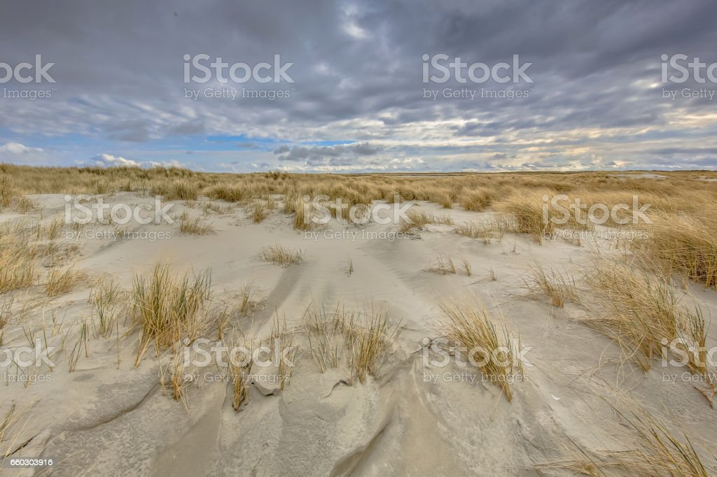Young Dune landscape formation stock photo