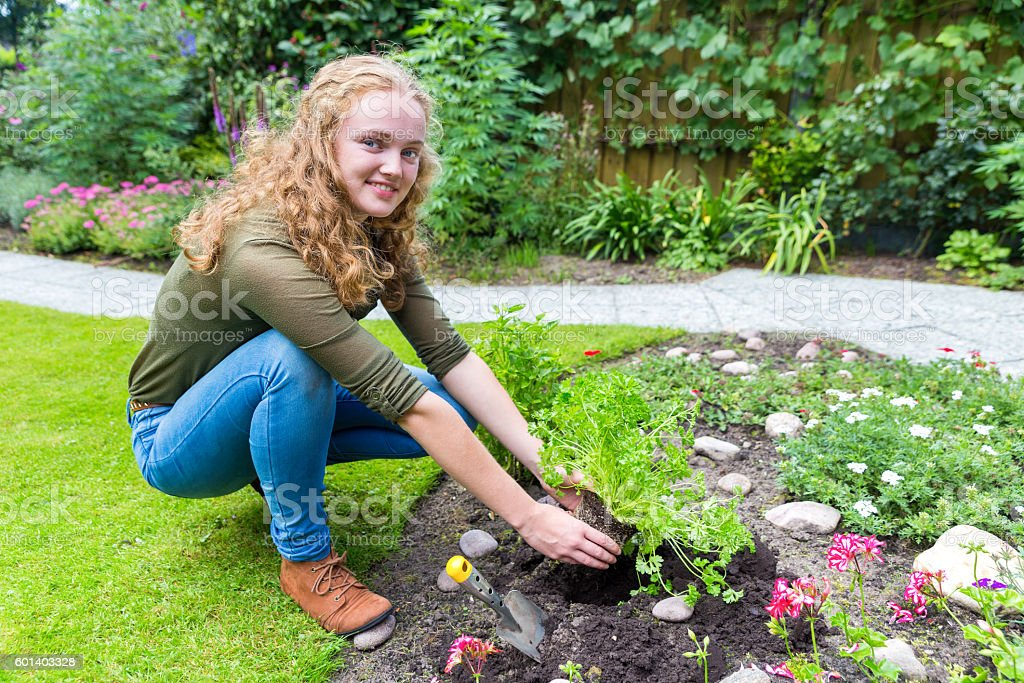 Young dutch woman planting parsley in garden soil stock photo