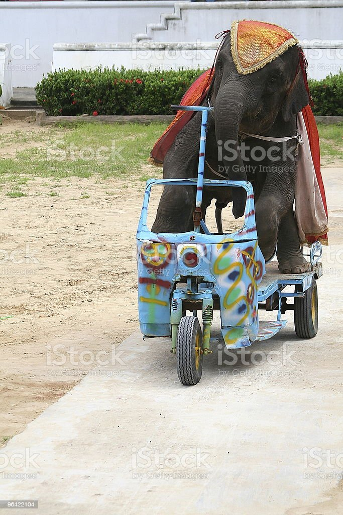 Young Elephant Riding A Tricycle stock photo