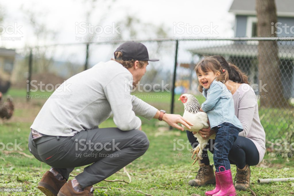 Young ethnic girl shows off her full-grown chicken to a family friend stock photo