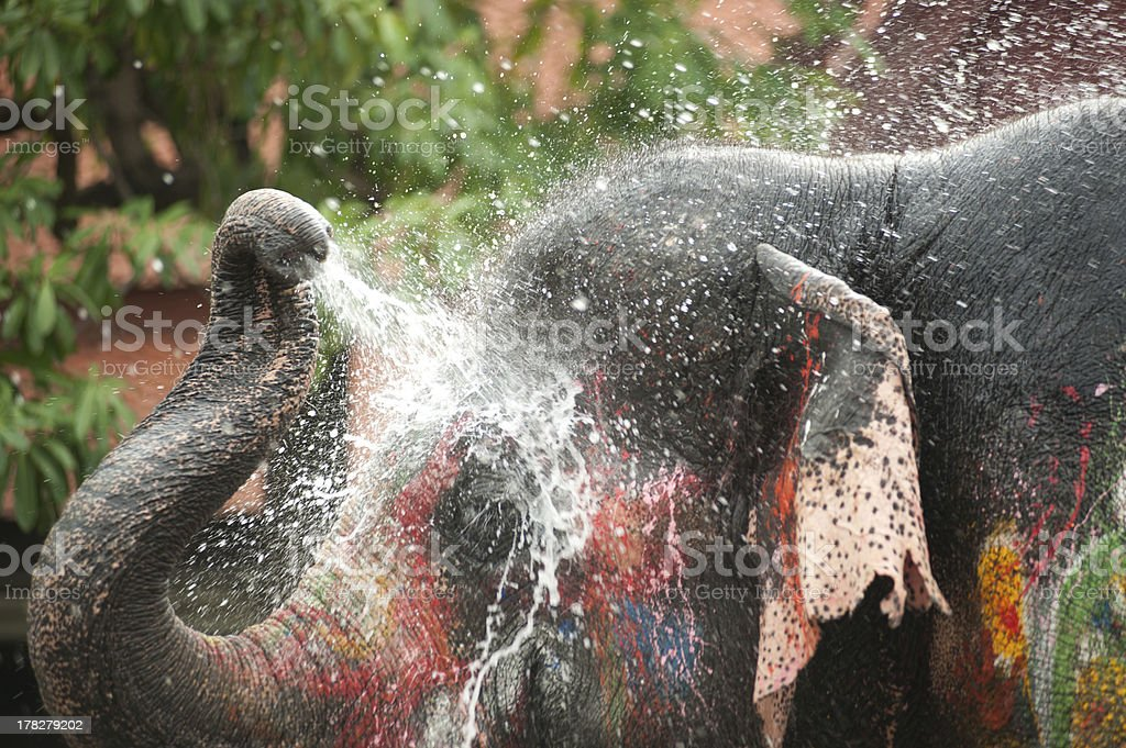 Young fancy Elephant playing water. stock photo