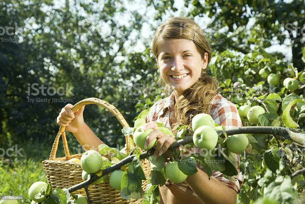 young farm girl picking apple royalty-free stock photo