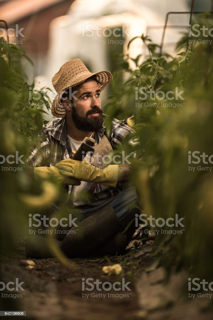 Young farm worker taking a break from gardening in greenhouse. stock photo