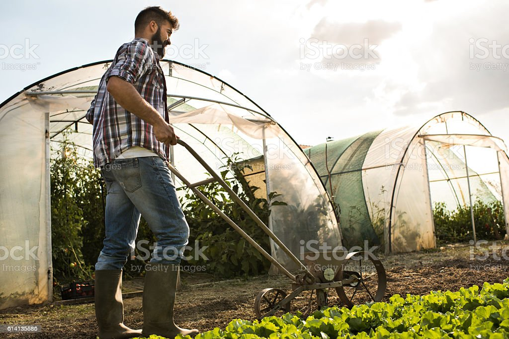 Young farm worker working with old-fashioned seeder on a field. stock photo