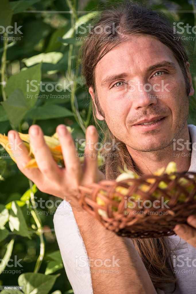 Young Farmer Harvesting Edible Zucchini Flowers stock photo