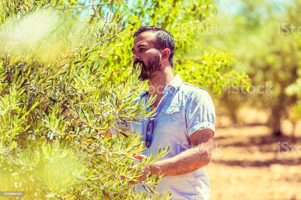 Young Farmer in Olive Yard stock photo