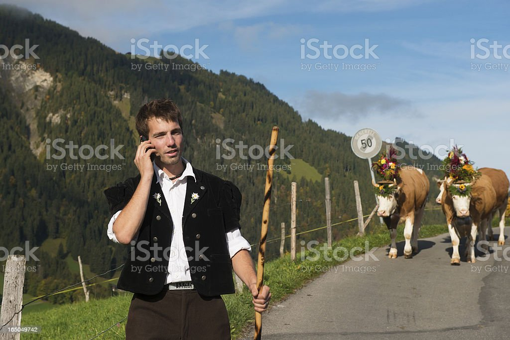 Young Farmer in Switzerland Stops Cow Procession to Answer Cellphone stock photo