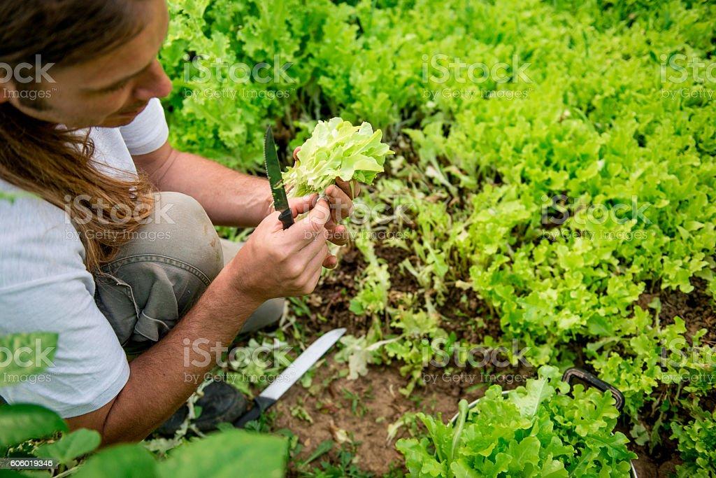 Young Farmer Portrait stock photo