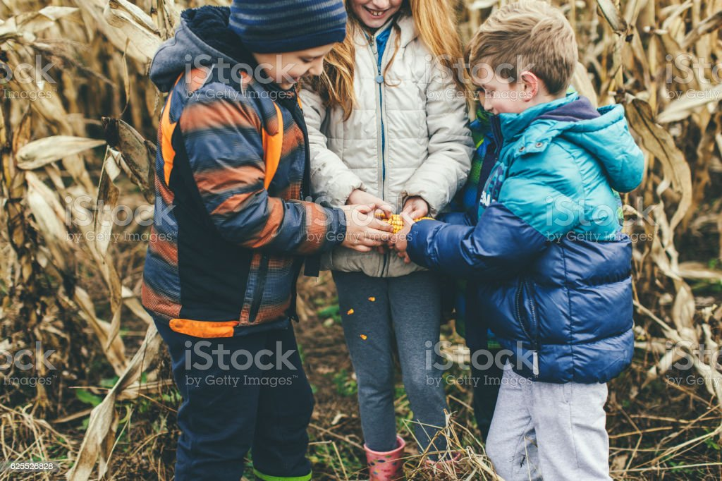 Young farmers stock photo