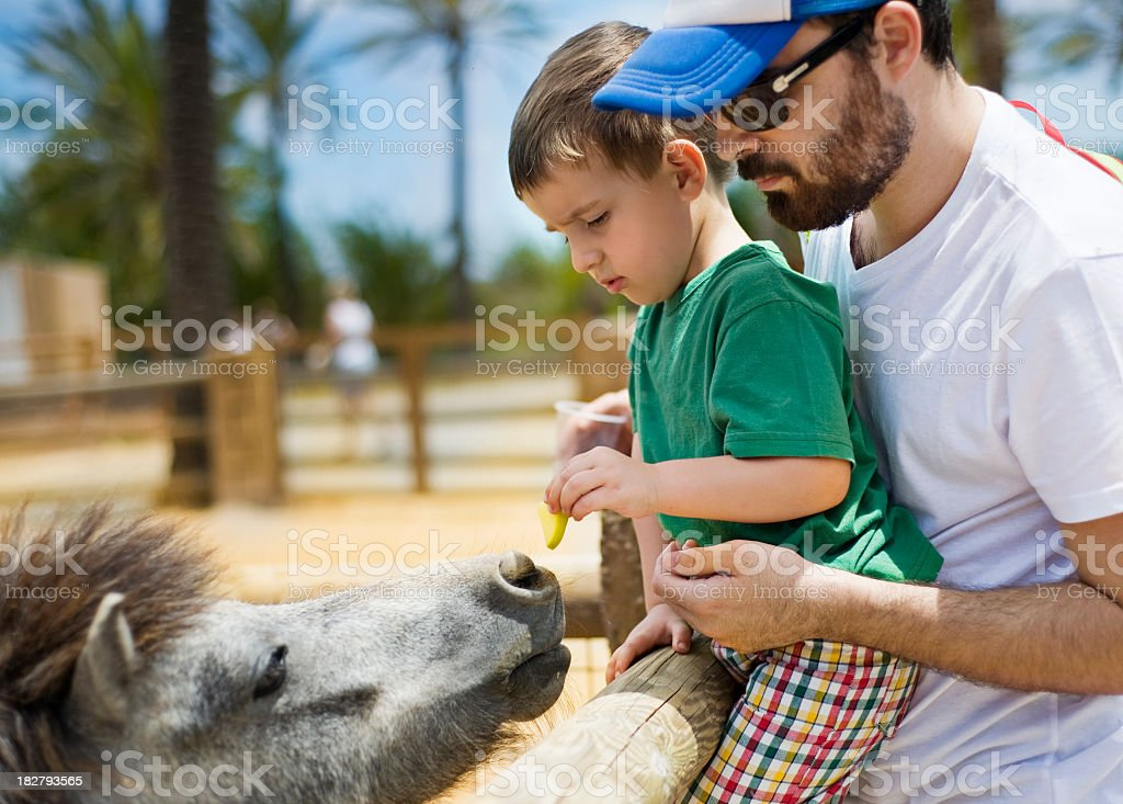 Young father and son feeding a pony stock photo