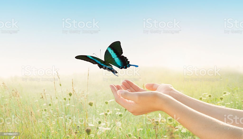 Young female, arms outstretched open palms, releasing butterfly in field stock photo