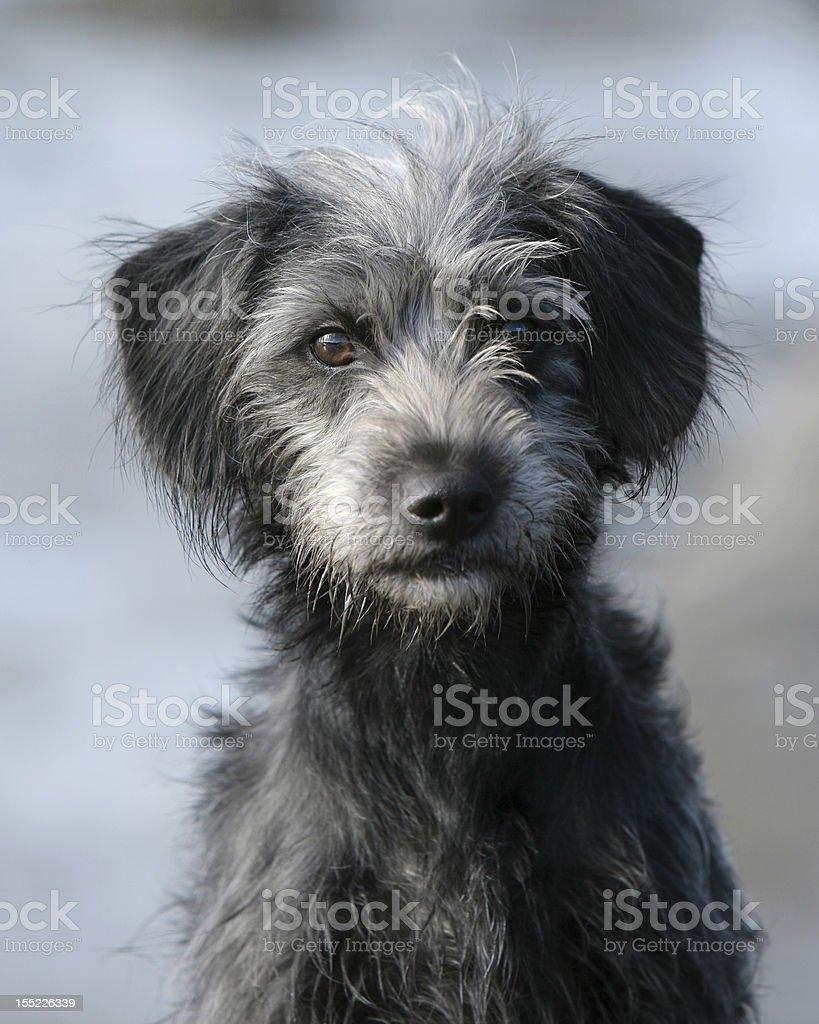 Young female dog stock photo