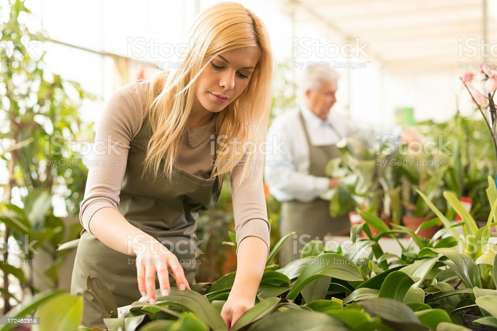 Young female florist working in greenhouse royalty-free stock photo