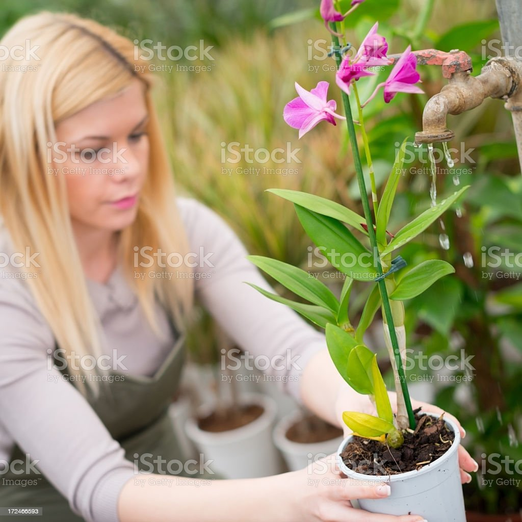 Young female gardener royalty-free stock photo