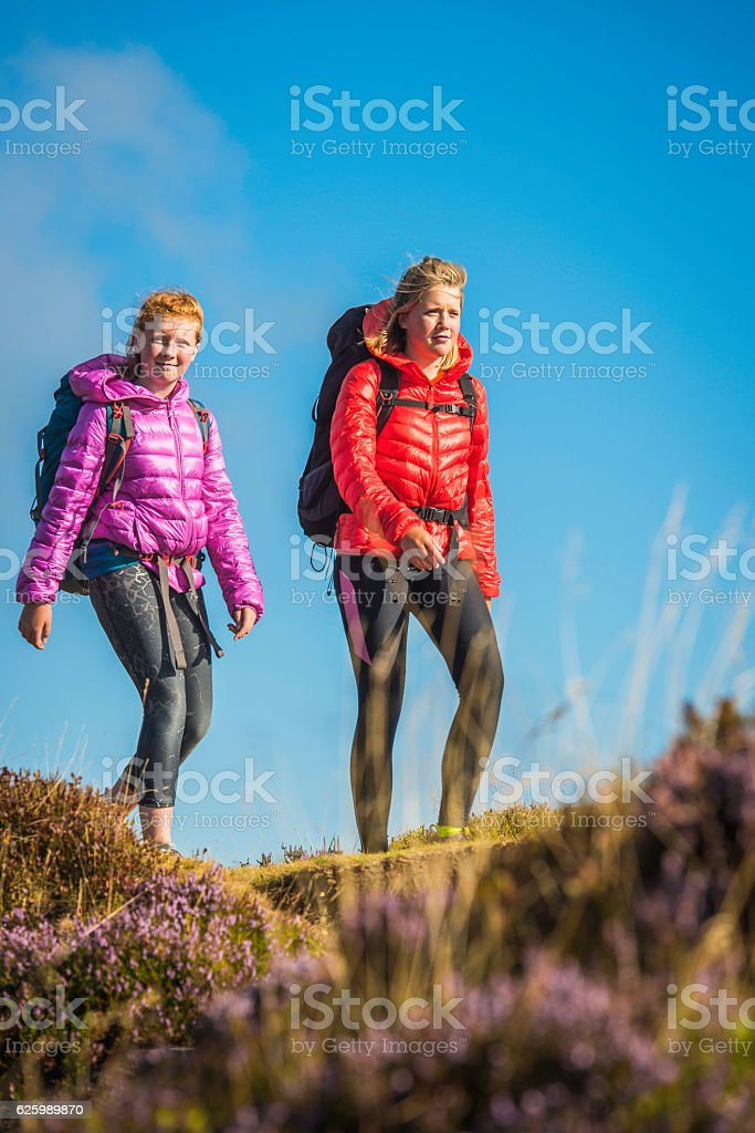 Young female hikers walking along idyllic summer heather mountain ridge stock photo