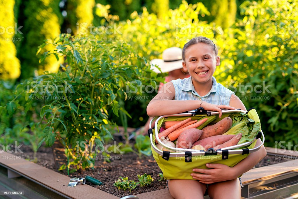Young female holding a basket of garden veggies stock photo