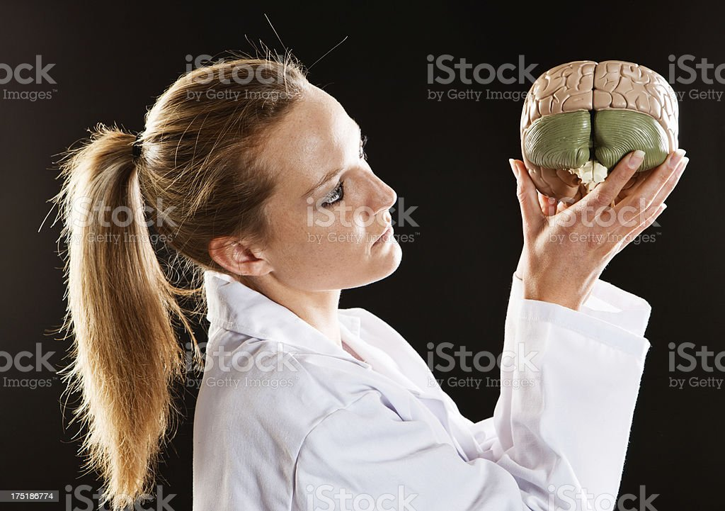 Young female medical professional looks seriously at model brain stock photo
