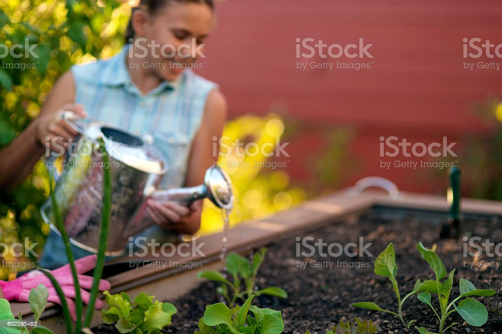 Young female using a watering can stock photo