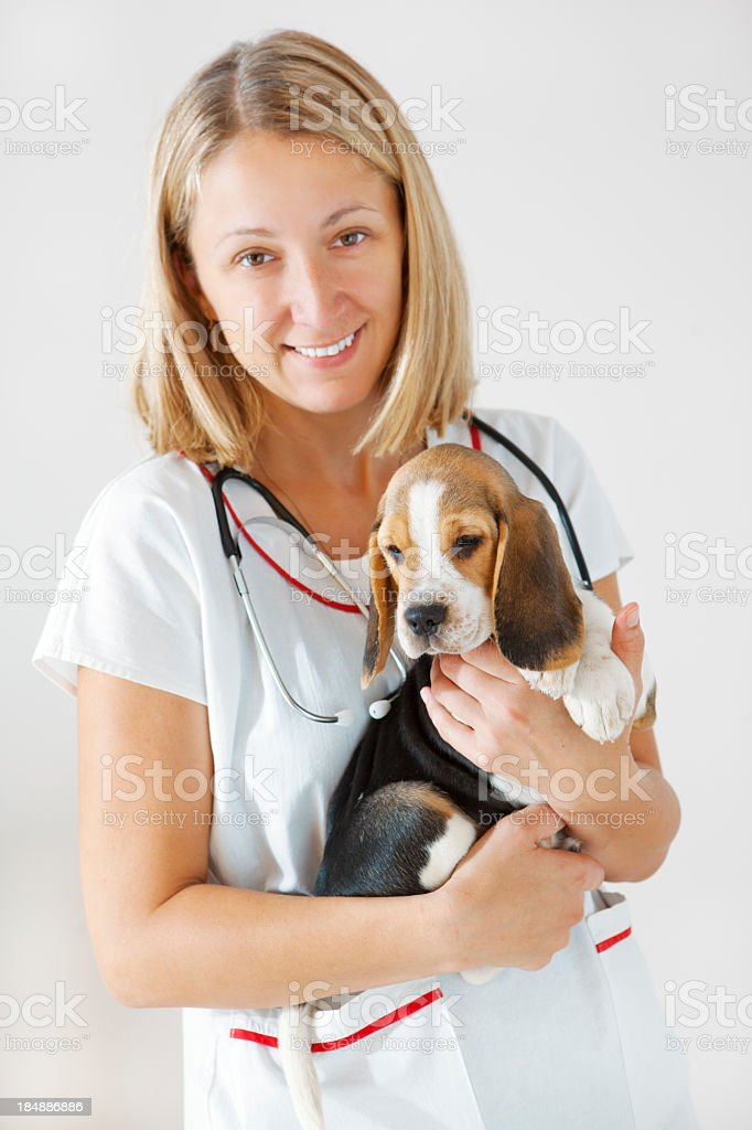 Young Female Veterinarian Embracing Cute Little Beagle Puppy royalty-free stock photo