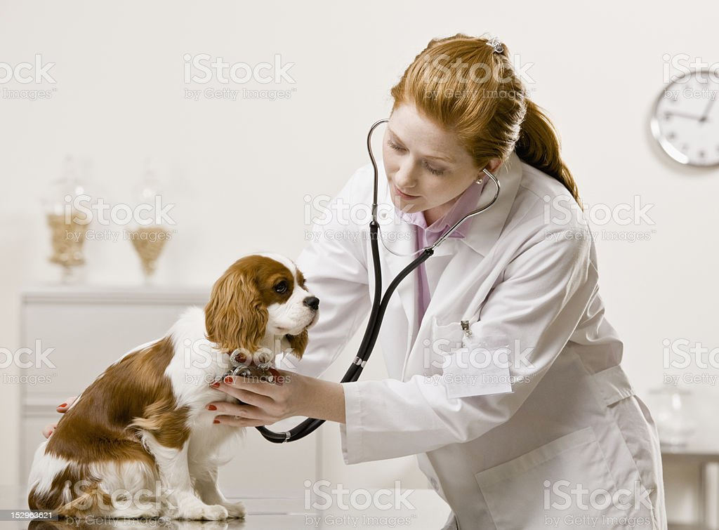 Young Female Veterinarian stock photo